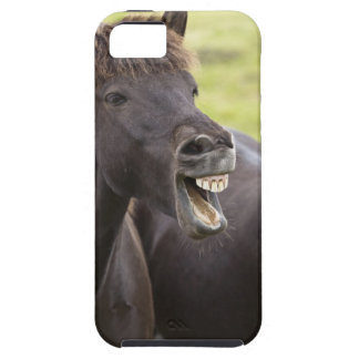 Icelandic horse with funny expression iPhone 5 case
