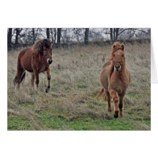 Icelandic horses card