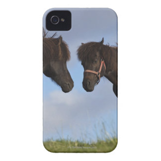 Icelandic horses facing each other iPhone 4 case