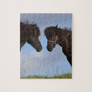 Icelandic horses facing each other jigsaw puzzle