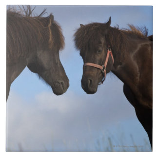 Icelandic horses facing each other tile