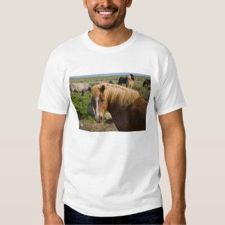 Icelandic Horses in northeastern Iceland. Shirt