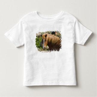 Icelandic Horses in northeastern Iceland. T-shirts
