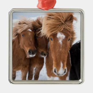 Icelandic Horses nuzzle, Iceland Silver-Colored Square Decoration
