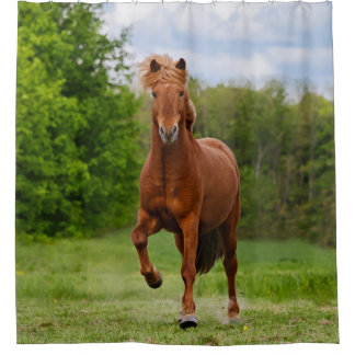 Icelandic Pony Tölt Funny Photo Horse Lovers - Tub Shower Curtain