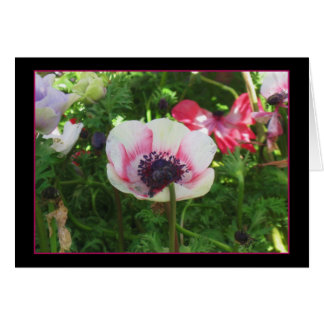 Icelandic Poppy Card