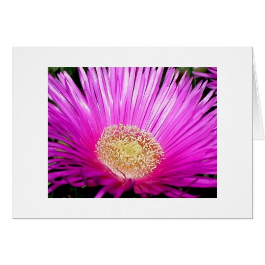 """Iceplant Blossom"" Card"