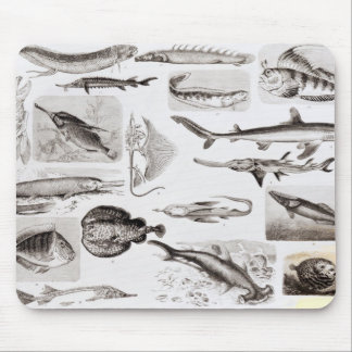 Ichthyology- Elasmobranch, Ganoid Mouse Mat