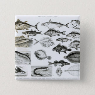 Ichthyology Osseous Fishes 15 Cm Square Badge