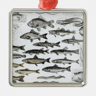 Ichthyology, Osseous Fishes, Marisipobranchs Christmas Ornament