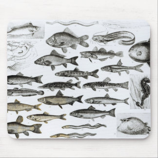 Ichthyology, Osseous Fishes, Marisipobranchs Mouse Mat