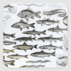 Ichthyology, Osseous Fishes, Marisipobranchs Square Sticker