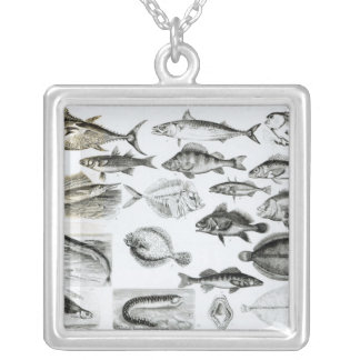 Ichthyology Osseous Fishes Silver Plated Necklace