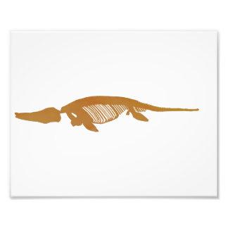 ichthyosaur skeleton photograph