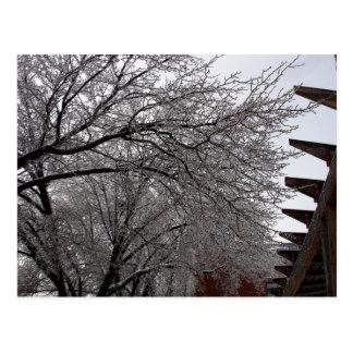 Icy Delmar Loop Postcard
