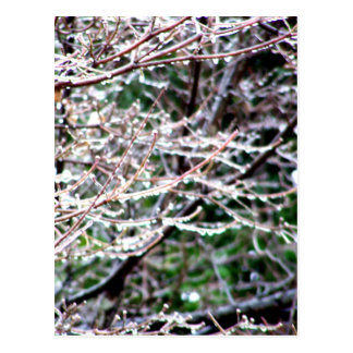 Icy Dogwood Postcard