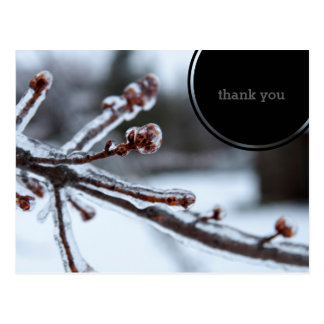Icy Tree Branch Thank You Postcard