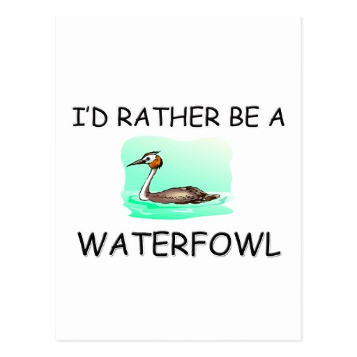 I'd Rather Be A Waterfowl Postcard