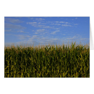 Idaho Corn Field Card