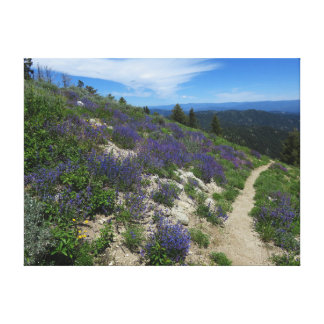 Idaho Mountain Hiking Trail Canvas Print