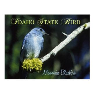 Idaho State Bird - Mountain Bluebird Post Cards