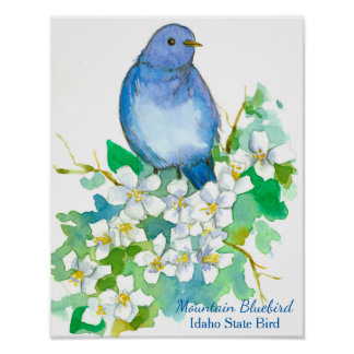Idaho State Bird Mountain Bluebird Poster