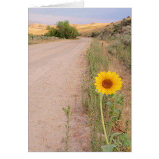 Idaho Wild Sunflower Card