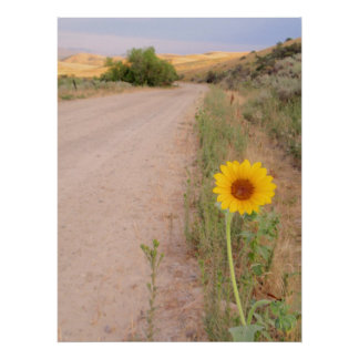 Idaho Wild Sunflower Poster