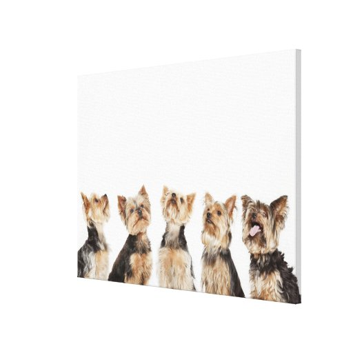 Identical dogs sitting together canvas print