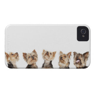 Identical dogs sitting together iPhone 4 Case-Mate cases
