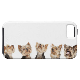 Identical dogs sitting together iPhone 5 case