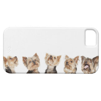 Identical dogs sitting together iPhone 5 cases