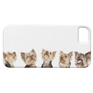 Identical dogs sitting together iPhone 5 covers