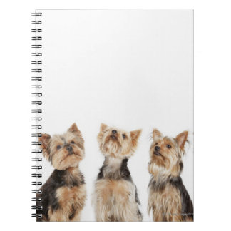 Identical dogs sitting together notebook