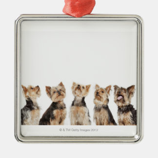 Identical dogs sitting together Silver-Colored square decoration