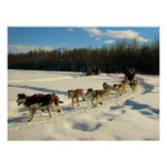 Iditarod Trail Sled Dog Race Poster
