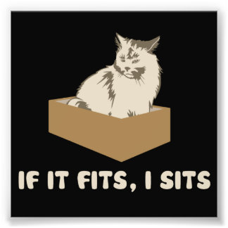 If It Fits, I Sits Cat Art Photo