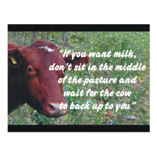 If You Want Milk Cow Postcard