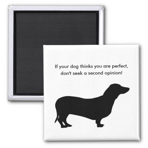 If your dog thinks you are perfect don't seek a refrigerator magnet