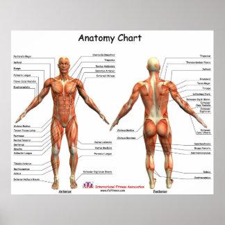 IFA Anatomy Chart Posters