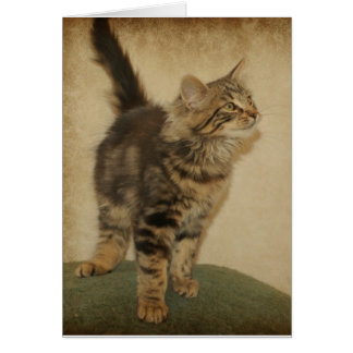 iger Kitten Notecard Greeting Card