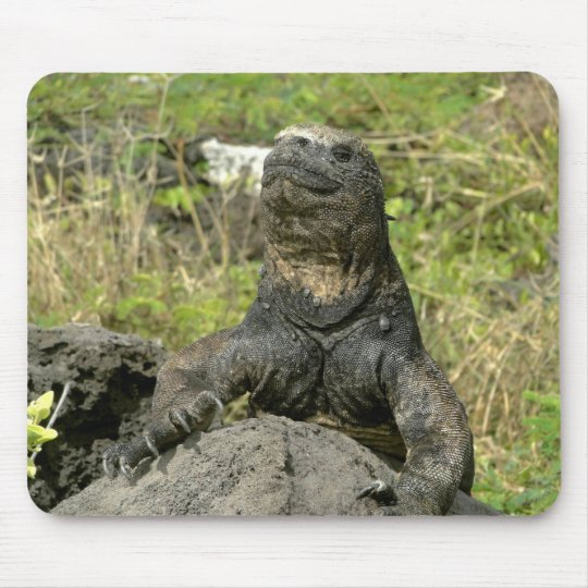 Iguana and plants of the Galapagos Mouse Mat