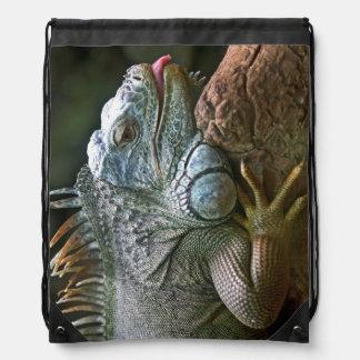 Iguana bag