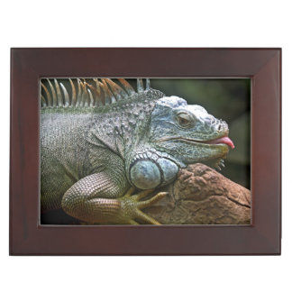 Iguana custom keepsake box