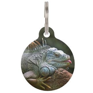 Iguana custom pet tag