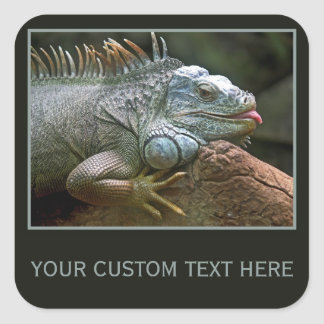 Iguana custom stickers