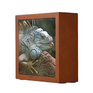 Iguana desk organizer