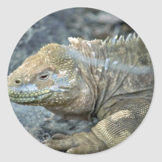 Iguana, Galapagos Islands Classic Round Sticker