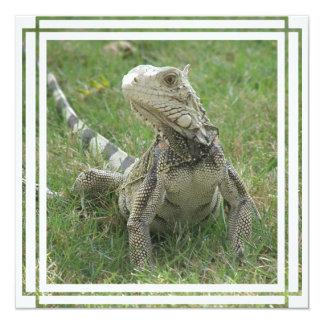 Iguana Invitation