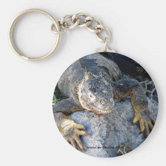 Iguana, Islas las Plazas, Galapagos Basic Round Button Key Ring